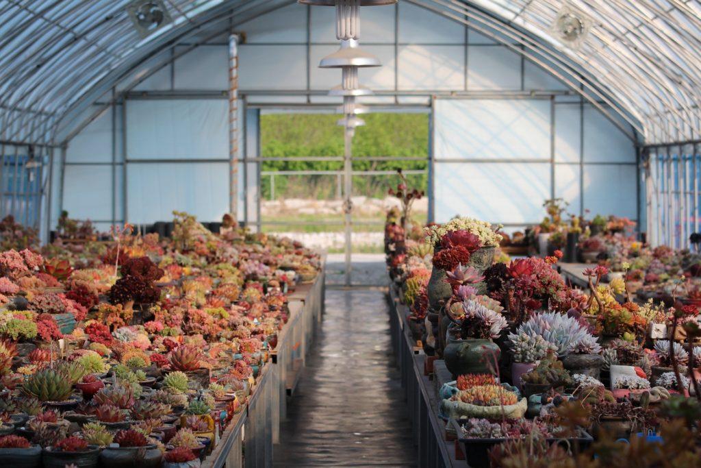 Drivhuseffekt atmosfære planter drivhus