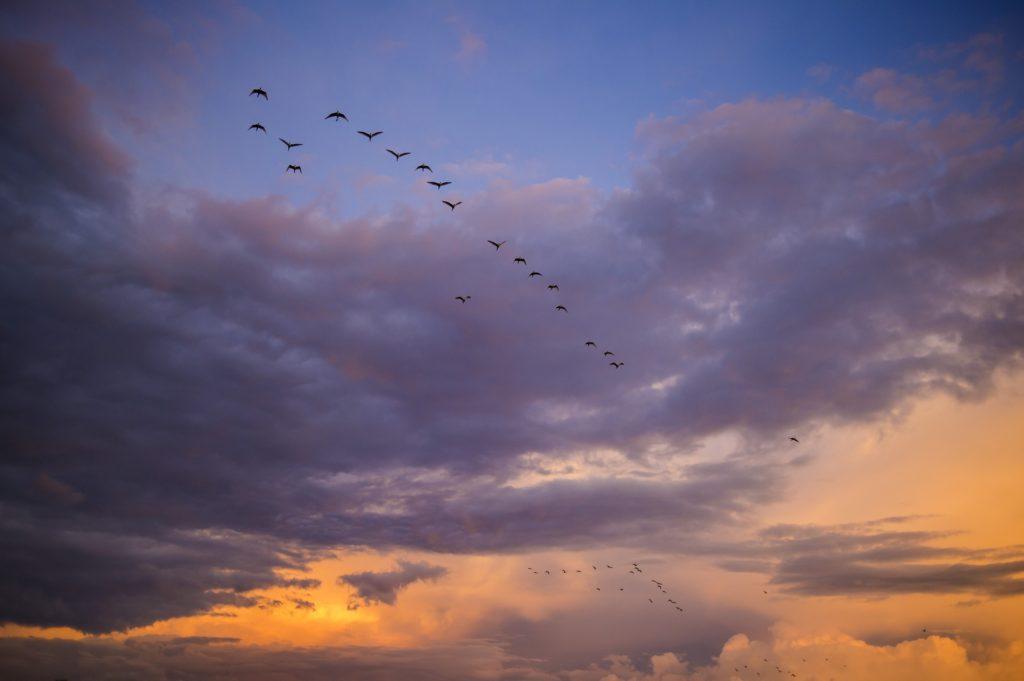 migrant fugle himmel